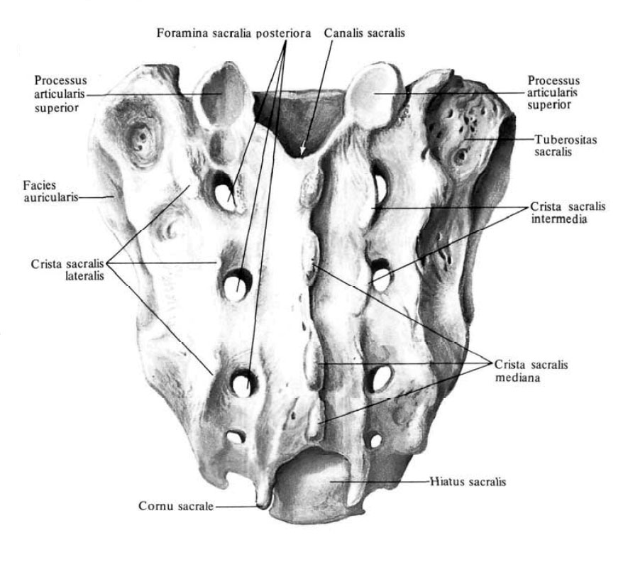 мыс крестца фото