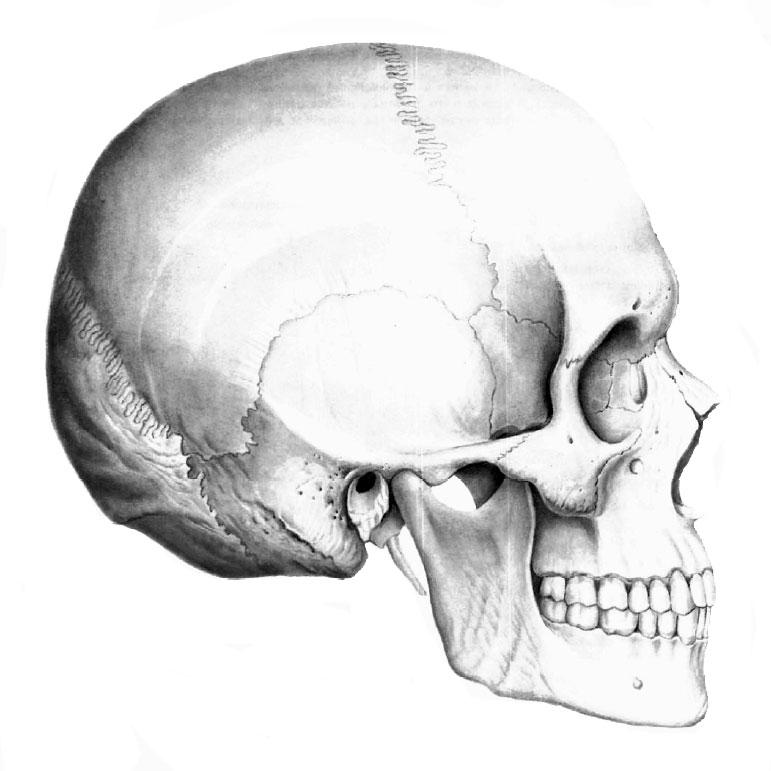 Череп и кости для тату