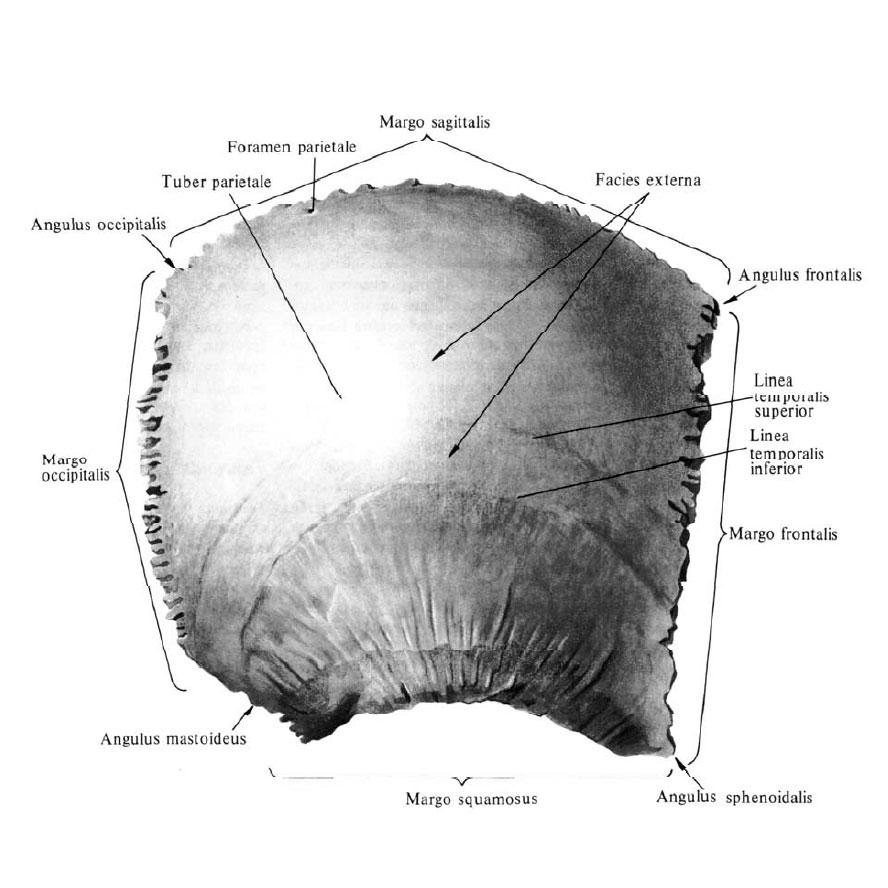внутренняя поверхность бедра как убрать жир