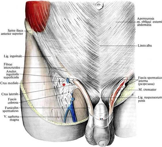 предполагается жжение в лобковой зоне слева и справа зависимости материала