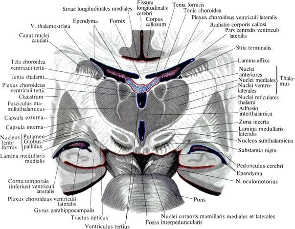imagine interioară cu varicoză inferioară)