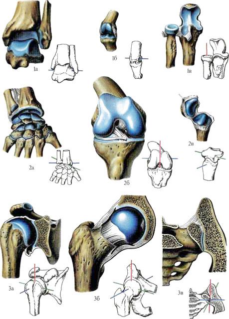 Виды суставов по форме описание операции бурсэктомия коленного сустава