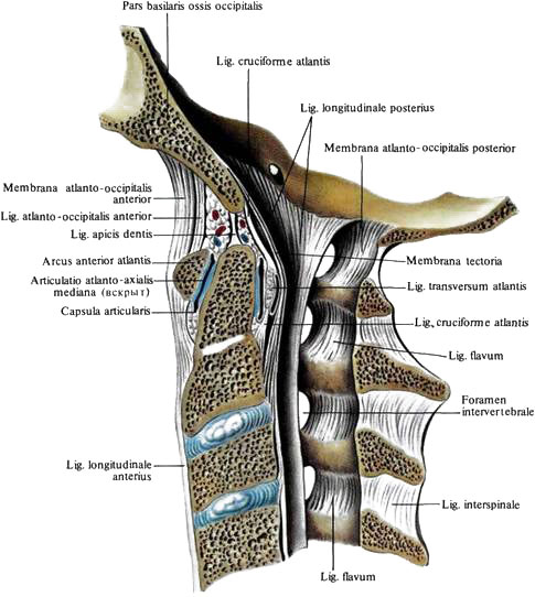 Синовиальные суставы черепа операция на тазобедренном суставе в казахстане