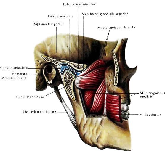 Верхний челлюстной сустав суставная гимнастика аудио скачать