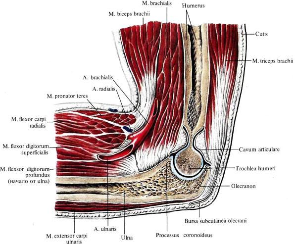 алезан крем для суставов отзывы лечение