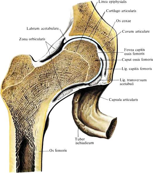 Чашеобразный сустав болят тазобедренные суставы.что делать