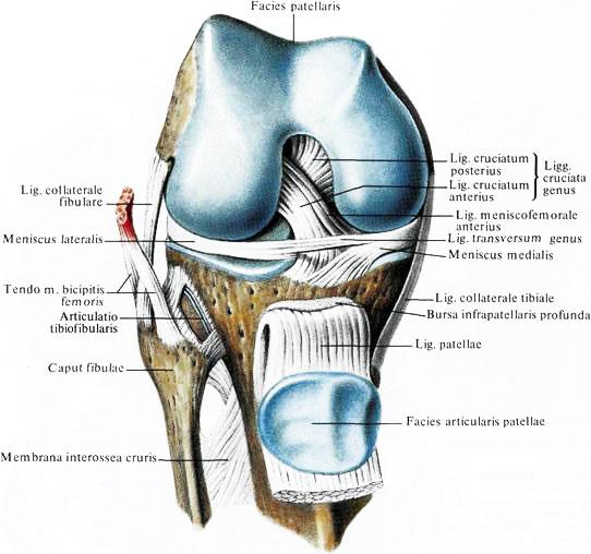 Сустава капсула коленного сустава скока стоит операцыя в плечевом суставе харьков