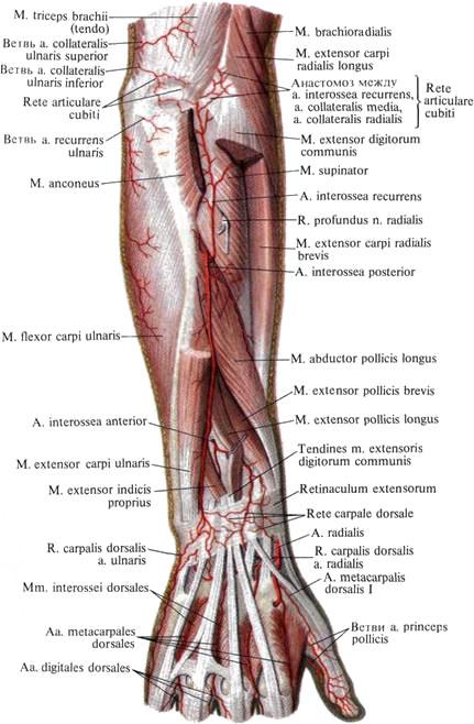 Боль в левом сзади со спины