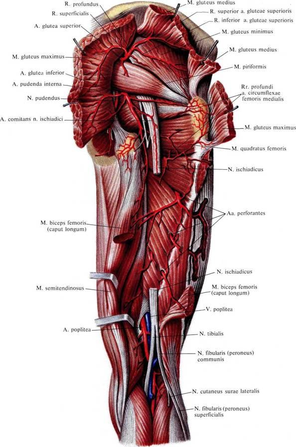 Сосудистая сеть коленного сустава чем лечить ревматизм суставов народными средствами