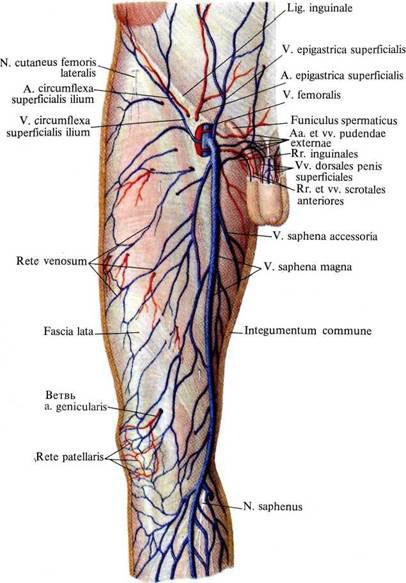от чего образуется холестерин в крови