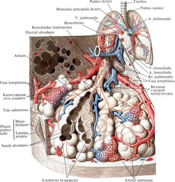 Анатомия Приложение